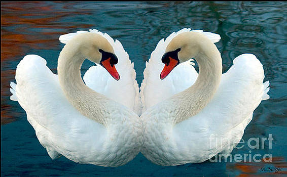 Heart Swans by Marlena  Burger
