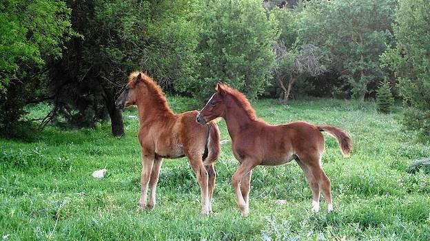 Reli Wasser - Horses-5
