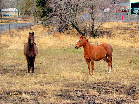 Horses in Pasture by Amy Bradley