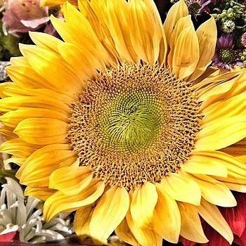 Image Created With #snapseed #flower by Shari Malin