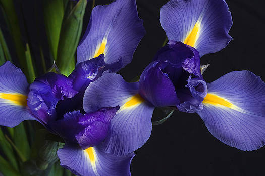 Iris Color by Christopher Brown