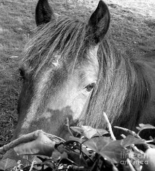 Joseph Doyle - Irish wild country horses in black and white.