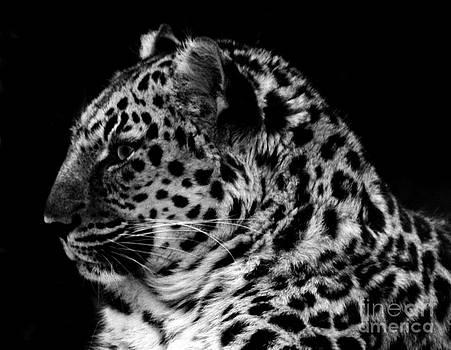 Nick Gustafson - Jaguar Profile