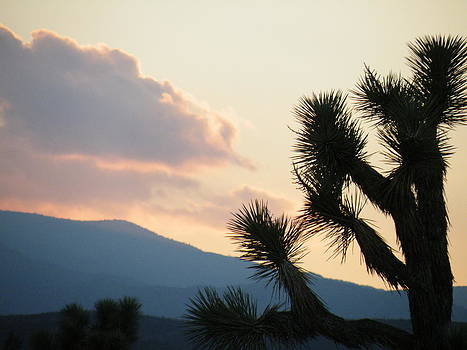 Joshua Tree Silhouette by Claire Plowman