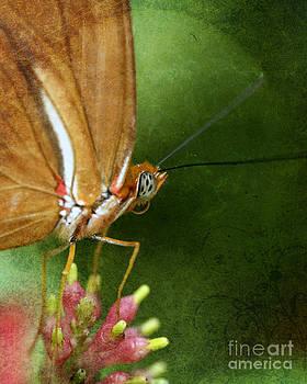 Julia Butterfly by Pamela Gail Torres