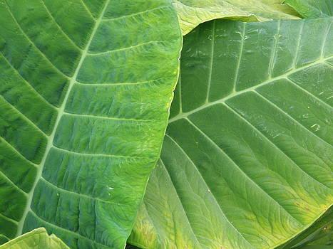 Jumbo Green Leaves by Priya Arun