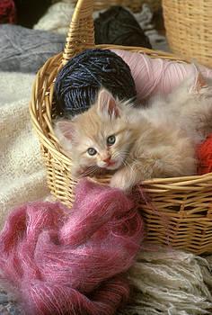Kitten in the Yarn by Phil Degginger