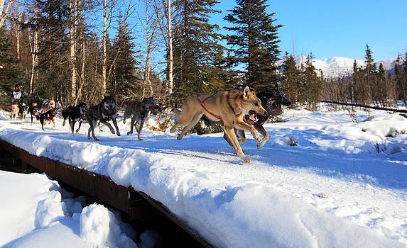Lead Dogs by Wyatt Rivard