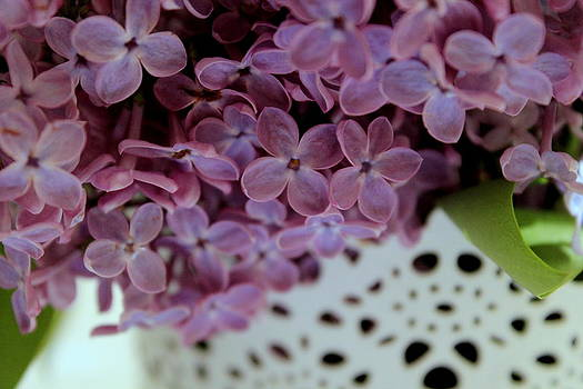 Lilac by Marica Jukic
