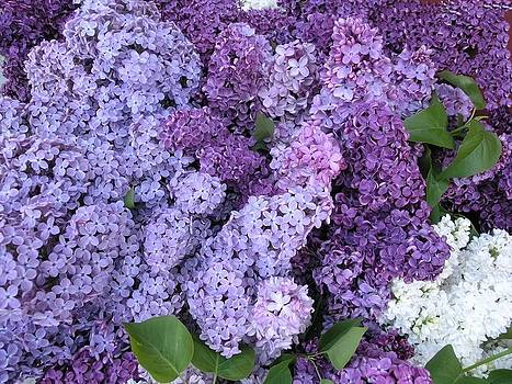 Lilacs by Peggy Mars