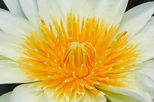 Lotus macro shooting. by Chatchawin Jampapha