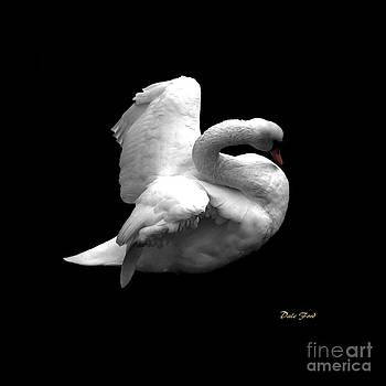 Dale   Ford - Majestic Swan
