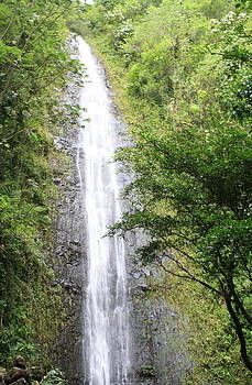 Manoa Falls by Brandon Radford