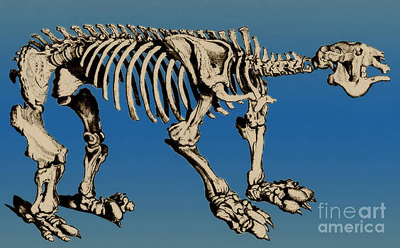 Science Source - Megatherium Extinct Ground Sloth