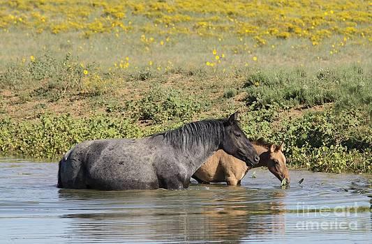 Monero Mustangs by Lori Bristow