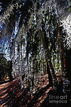 Mossy Curtains by Scott Allison