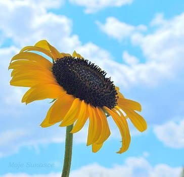 My little Sunshine by Marija Djedovic
