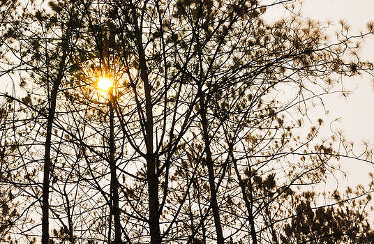 Nature by Natee Srisuk