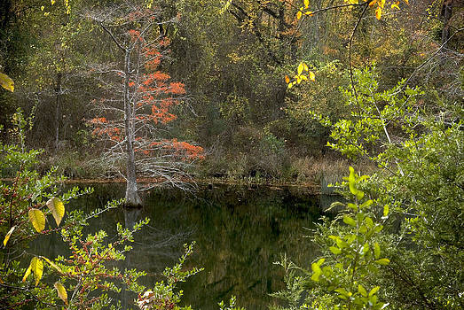 Natures Frame by Cindy Rubin