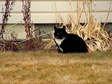 Neighbors Cat by Amy Bradley