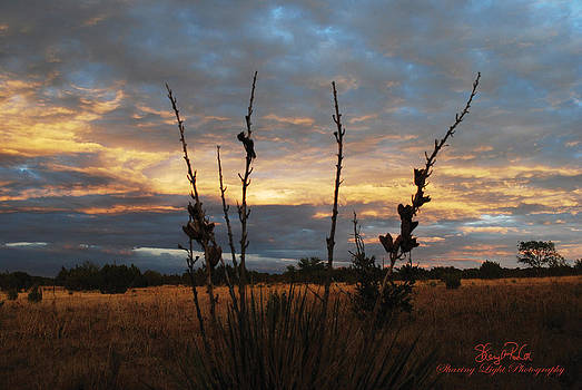 New Mexico Yucca by Sheryl Cox