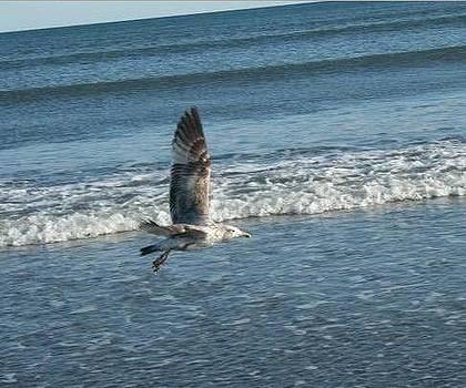 Newport seagull by Stephen Melcher