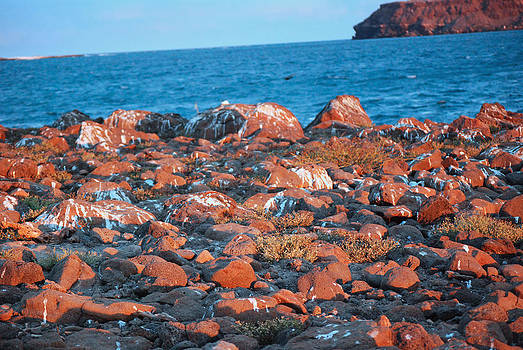Harvey Barrison - North Seymour Island at Sunset