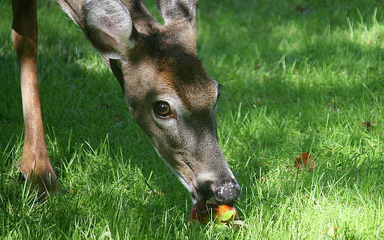 Annie Babineau - oh deer