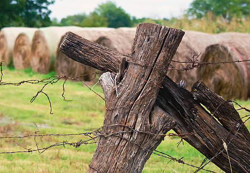 Lisa Moore - Old Cross Fence