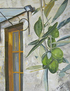 Olives in Tuscany by John Schuller