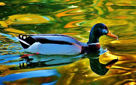 On Golden Pond by Helen Carson