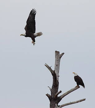 On the Hunt by Glenn Lawrence