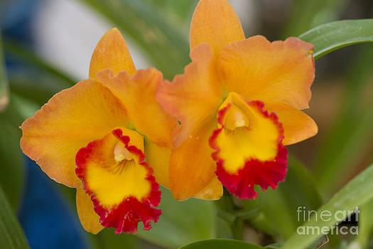 Orchid-5 by Tad Kanazaki