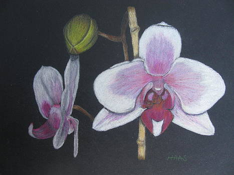 Orchid Transformation by Fran Haas