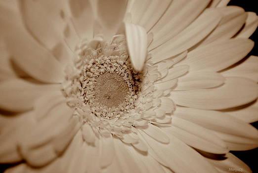 Pale... by Marija Djedovic