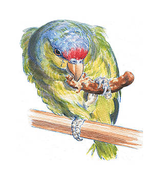 Parrot eating toast by Maureen Carter