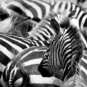 Pattern Of Zebras by Konstantin Kalishko