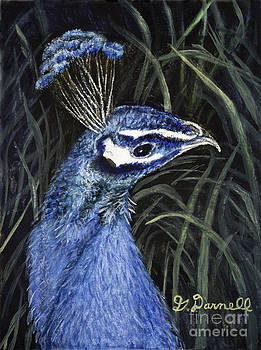 Peacock in the Grass by Gail Darnell