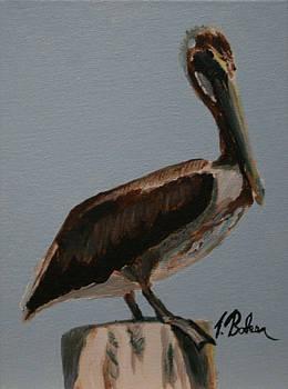 Pelican on a Post by Tony Baker
