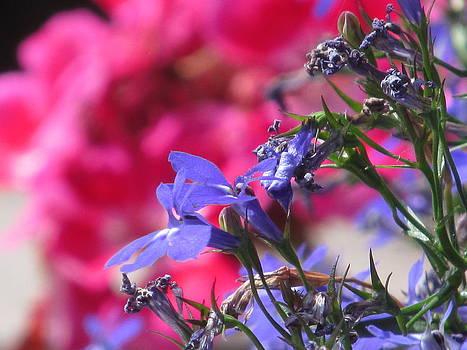 Alfred Ng - pink and blue