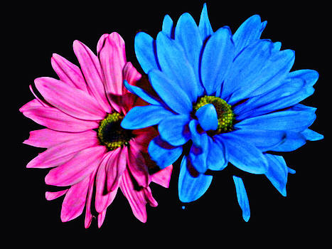 Pink and Blue by Tonya Smith