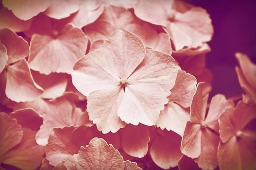 Pink Hydrangea by Cathie Tyler