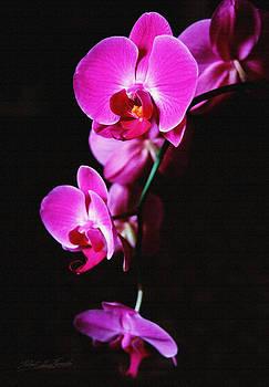 Robert Kernodle - Pink Orchid Trio