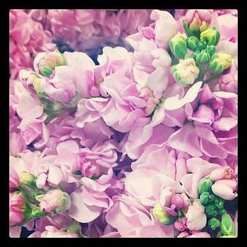 Pink Petals by Kristina Parker