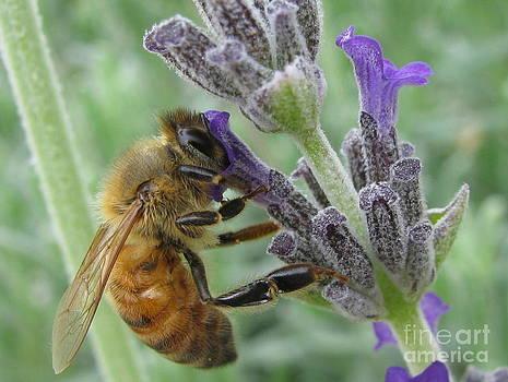 Pollen Catcher by Tina Marie