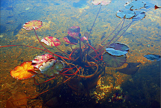 Pond by Janet G T