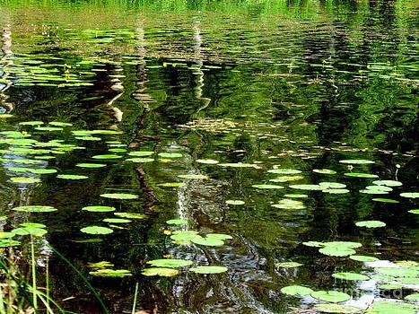 Pauli Hyvonen - Pond