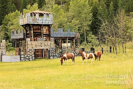 Roland Stanke - ponies and a castle
