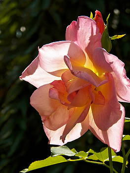 Pretty In Pink by Gloria Warren