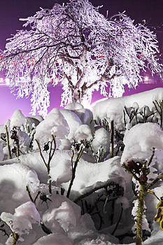 Purple Ice by Louie Zaninovich